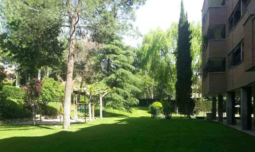 jardines con arboles